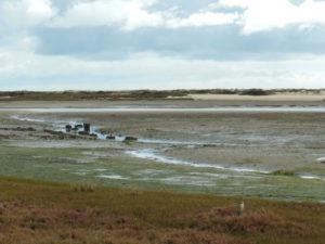 Watt ohne Wasser mit Austernsuchern